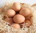 Eggs In A Basket Royalty Free Stock Photos - 3390938