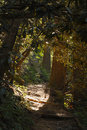 Pathway In A Forest Stock Image - 3395541