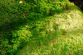 Details Of Green Moss Stock Images - 3397684