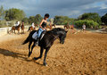 Training Of Horse Competition Royalty Free Stock Photography - 3398007