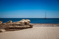 Driftwood In The Baltic Sea Royalty Free Stock Image - 33906786