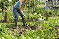 Woman Digging On An Allotment Royalty Free Stock Photography - 33913017