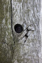 Full Frame Shot Of Tree Trunk With Hole Royalty Free Stock Photos - 33917838