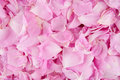 Pink Rose Petals Royalty Free Stock Photos - 33947278