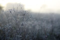 Frost Stock Images - 33962624