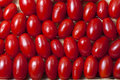 Small Oblong Red Ripe Tomatoes Stock Photo - 33988180