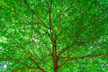 Background Of Green Leave Nature, Park Tree Stock Photo - 34006330