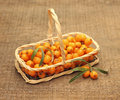 Useful Sea-buckthorn Berries In Basket Royalty Free Stock Image - 34008886