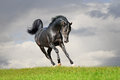 Free Arab Horse In Field Royalty Free Stock Photo - 34015745
