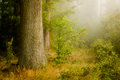 Mist Forest Royalty Free Stock Photography - 34036867
