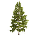 Tall Pine Tree Isolated Stock Images - 34045054