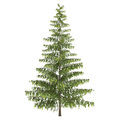 Tall Pine Tree Isolated Royalty Free Stock Image - 34045136