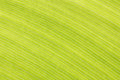 Abstract Green Leaf Lines Background Texture Stock Image - 34079751