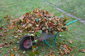 Wheel Barrow With Cutted Branches And Leaf Litter Front View Royalty Free Stock Photography - 34109117