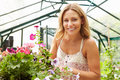 Woman Growing Plants In Greenhouse Stock Images - 34169014