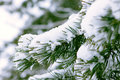 Spruce Branch Snow Covered Royalty Free Stock Image - 34169696