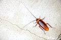 Close Up Cockroach Royalty Free Stock Images - 34174079