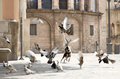 Dog Is Chasing Pigeons In The Square Stock Images - 34187834