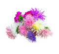 Colorful Aster Royalty Free Stock Photo - 34198425