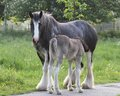 Mare And Foal Stock Photo - 34205730