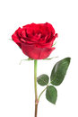 Single Red Rose Stock Images - 34215564