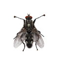 Macro Fly Isolated On White Stock Images - 34254394