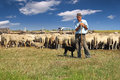 Shepherd With Grazing Sheep Stock Images - 34257704