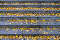 Granite Stone Stairs With Leafs Royalty Free Stock Image - 34283736