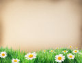 Water Colour Paper With Grass And Flowers On It. Royalty Free Stock Photo - 34291755