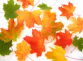 Maple Leaves Royalty Free Stock Photos - 3433368