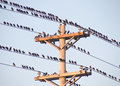 Birds On A Wire Stock Photography - 3435202