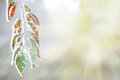 Background Of Frozen Leaves Under The Frost And Sun Stock Image - 34301711