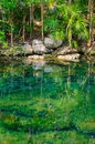Jungle Pond Royalty Free Stock Photography - 34348767