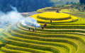 Terraced Rice Fields Royalty Free Stock Photos - 34357068