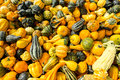 Lot Of Colorful Ornamental Squash Stock Images - 34396574