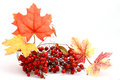 Red Berries And Leaves Royalty Free Stock Photos - 3445528