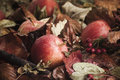 Fallen Apples On Leaves Stock Photography - 34416302