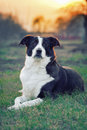 Dog In Sunset Light Stock Images - 34438964