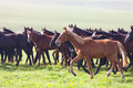 Herd Of Horses On A Summer Pasture Royalty Free Stock Photos - 34440278