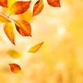 Autumn Leaves Background Royalty Free Stock Photography - 34453307