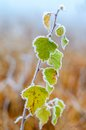 First Frosts. Royalty Free Stock Image - 34466036