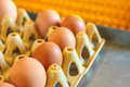 Crate With Fresh Eggs On Top Of A Conveyor Belt Royalty Free Stock Photos - 34470638