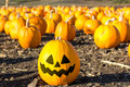 Pumpkin Patch In California. Stock Images - 34496294