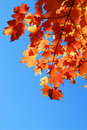 Fall Maple Leaves Stock Photography - 3454312