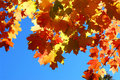 Fall Maple Leaves Stock Photos - 3454313
