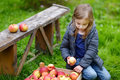 Little Girl Sitting Eating An Apple On Autumn Day Stock Photography - 34515422