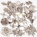 Collection Of Vector Hand Drawn Detailed Flowers For Design Royalty Free Stock Images - 34516859