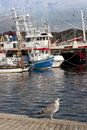 Seagull And Boats Moored In The Calm Waters Of Killybegs Royalty Free Stock Image - 34520656