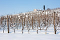 Tuscany: Wineyard In Winter Stock Image - 34533021