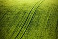 Green Wheat Field With Tracks Stock Images - 34540324